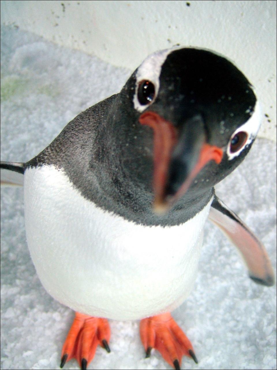 紳士企鵝5.jpg