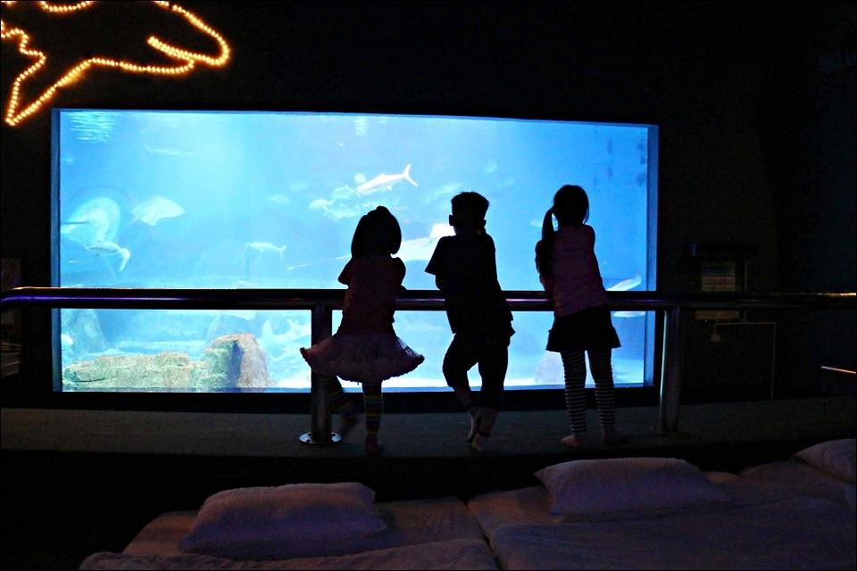 大洋池-瞭望區.jpg