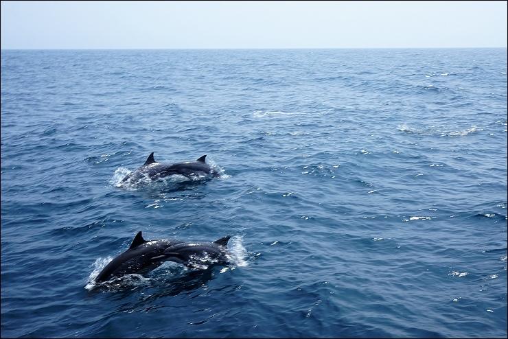 蘭陽-週邊旅遊-長吻飛旋海豚.jpg