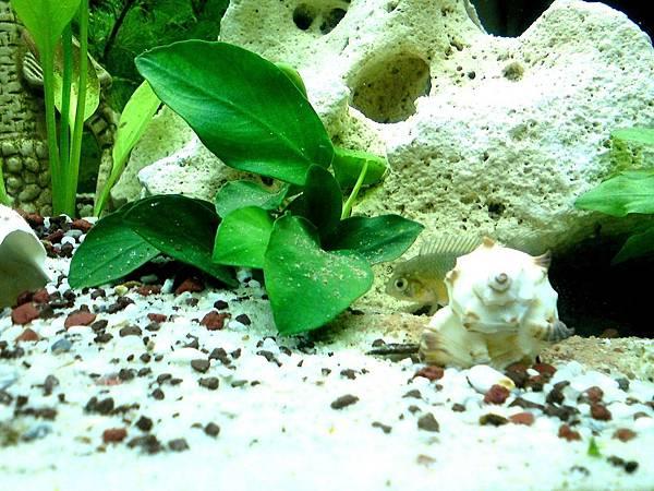 aquarium-240035_1280.jpg