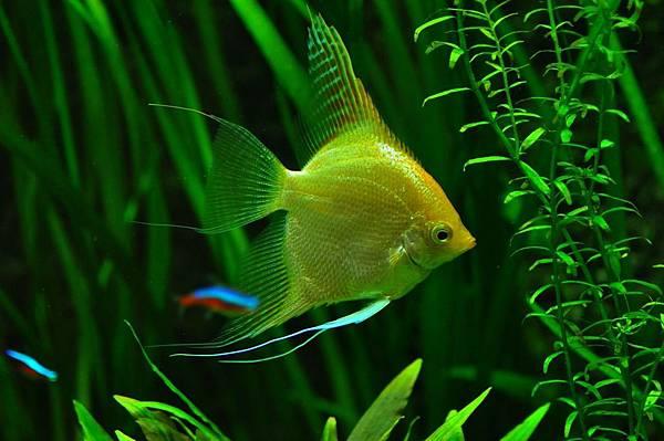 fish-936504_1280.jpg