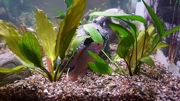 aquarium-fish-242413_1280.jpg