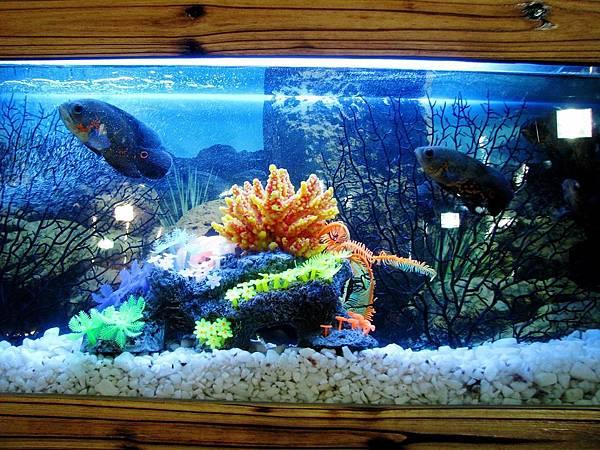aquarium-390745_960_720.jpg