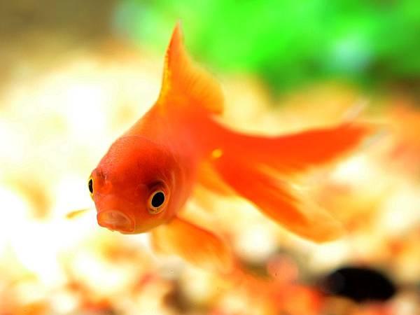 fish-881161_960_720.jpg