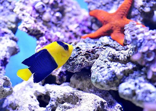 starfish-1453912_960_720.jpg