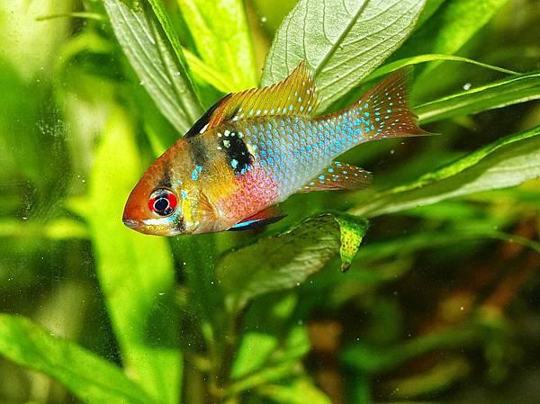 aquarium-626548_960_720.jpg