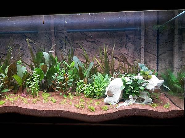 aquarium-248144_960_720.jpg