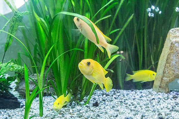 aquarium-1477377_960_720.jpg