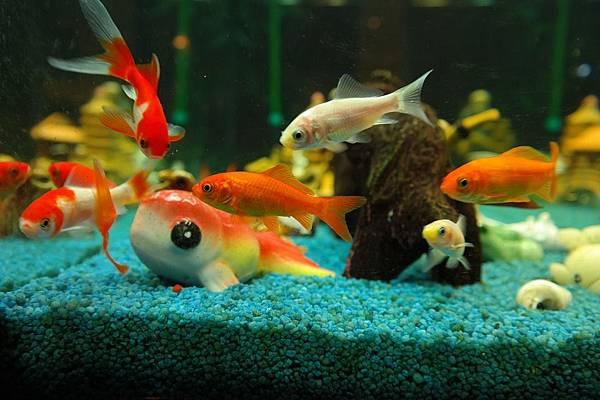 fish-235781_960_720.jpg