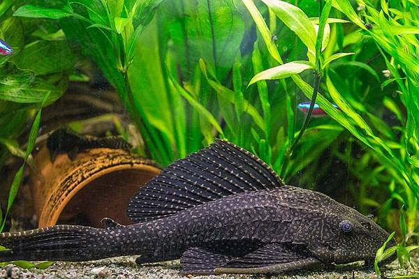 fish-1293971_960_720.jpg