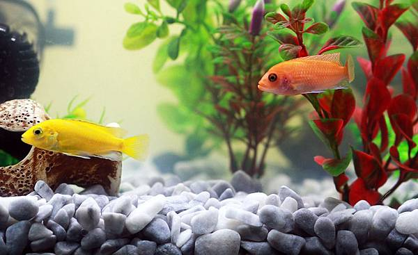 fish-961953_960_720.jpg