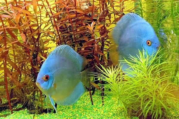 fish-1310689_960_720.jpg