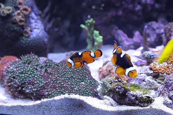 fish-397805_1280.jpg