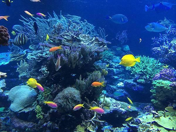 underwater-408904_1280.jpg