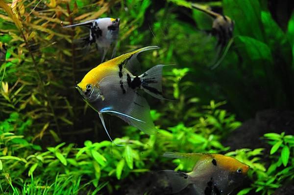 fish-1759844_960_720.jpg