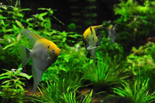 fish-1759839_960_720.jpg