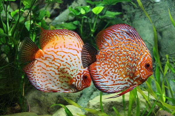 fish-1726604_960_720.jpg