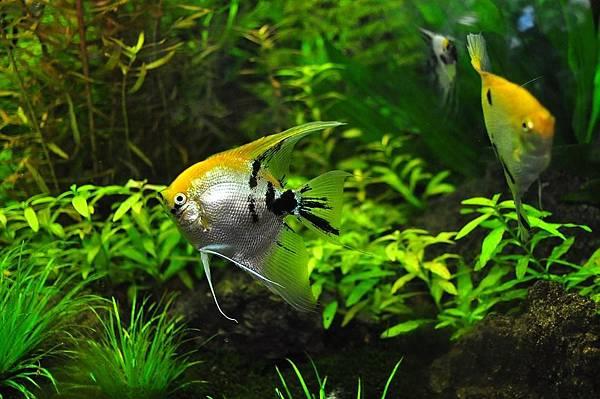 fish-1759820_960_720.jpg