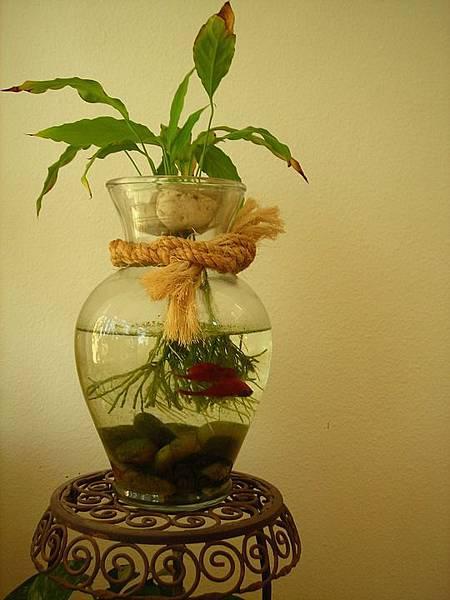 betta-fish-433421_960_720.jpg