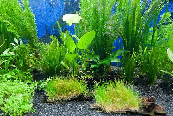 aquarium-plants.jpg