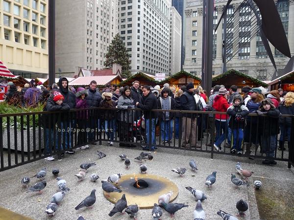 鴿子取暖+餵食秀