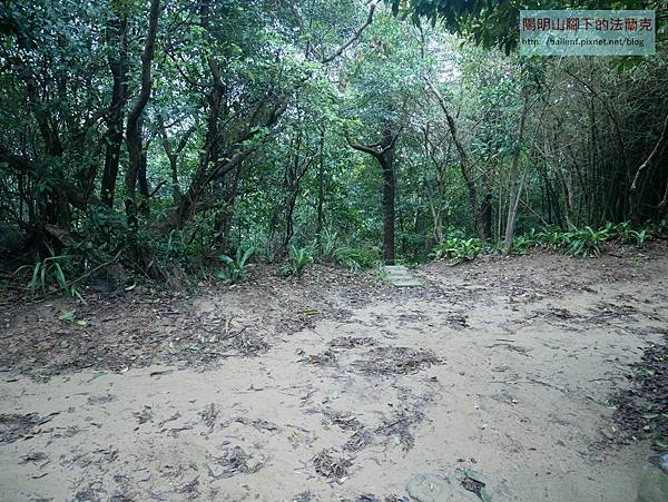 P1930601.jpg