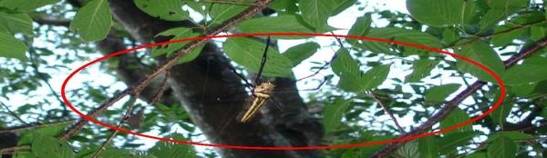 DSC00275-蜘蛛(放大).jpg