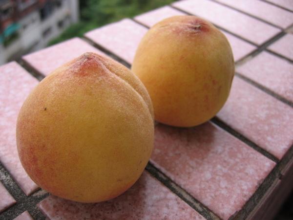 水蜜桃2 003.jpg