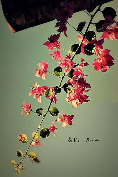 擠身在小小巷子裡毫不起眼的花 其實是那麼樣的美麗  有人和我一樣我看見了嗎
