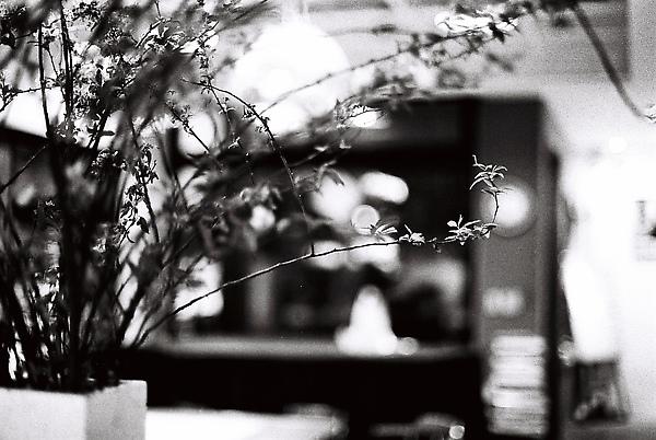 舞團美麗的花花草草都要謝謝哲維