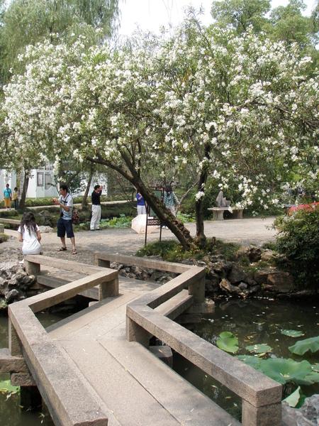 彎橋老樹細河畔