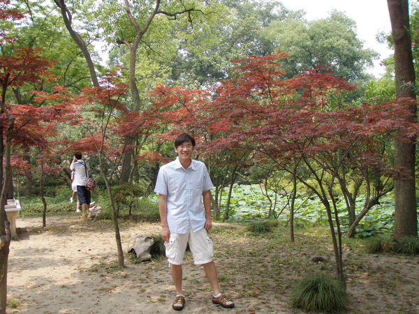紅楓下的竹子