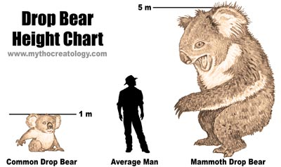 Drop-Bear-Size-Chart.jpg