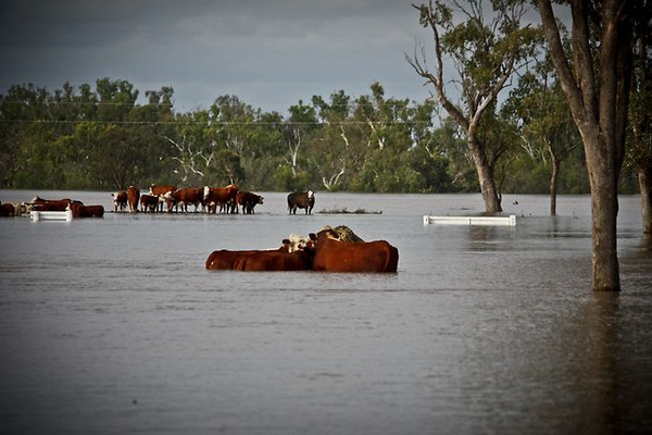 Flood Bundy