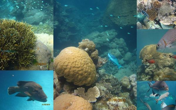 100521 Norman Reef7.JPG