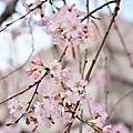 JAP_8350.jpg