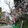 JAP_8368.jpg