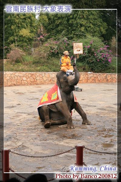 雲南民族村大象表演