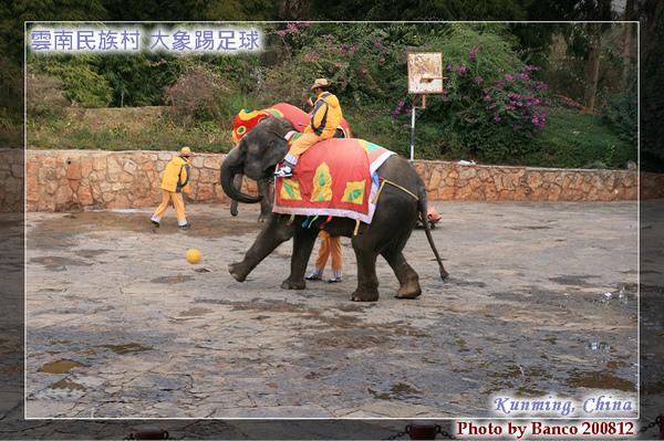 雲南民族村大象表演踢足球