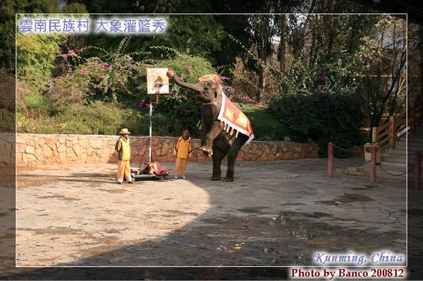 雲南民族村大象表演灌籃