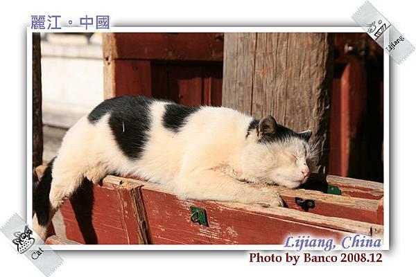 黑龍潭打盹的懶貓