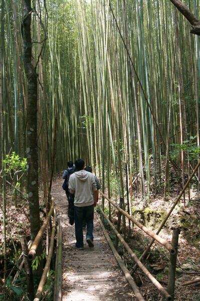 回程再次欣賞竹林