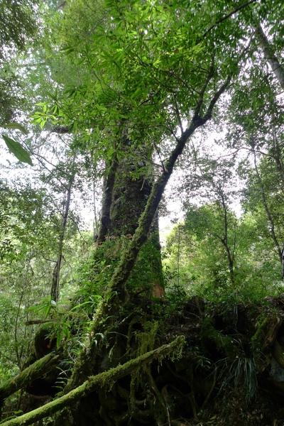 有什麼比在森林裡漫步更舒服的事呢?