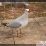翠湖公園的候鳥