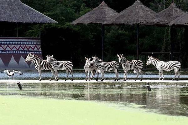 safari[1].JPG