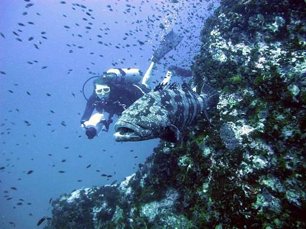 Scuba-Diving-Koh-Tao-Thailand-03
