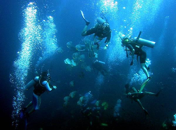 ko_tao_divers