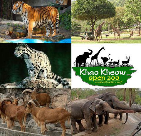 khao kheow open zoo 綠山國家動物園