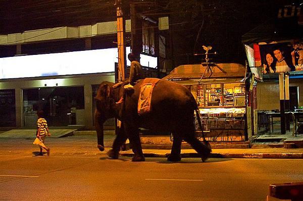 13在大城市裡比如曼谷,偶爾會看到有人帶著大象在城市裡走
