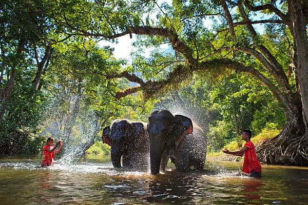 Web-Elephant-Bathing-in-Sangkhlaburi-Kanjanaburi-Editorial.jpg